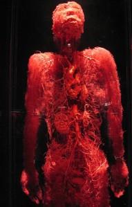 capillariesbmp
